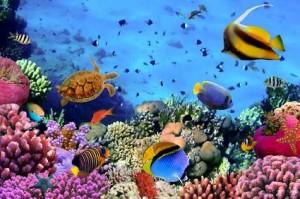 Schnorcheln im Roten Meer in Ägypten: www.urlaubsreise-tipp.de/schnorcheln-im-roten-meer-in-aegypten