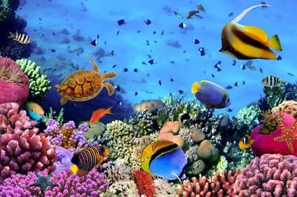 Schnorcheln Rotes Meer Ägypten