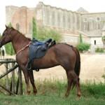 Reiterferien Toskana