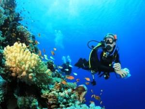 Tauchen im Roten Meer in Aegypten
