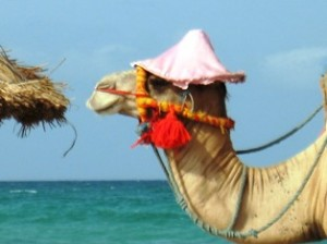 Urlaub auf Djerba