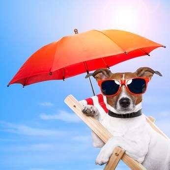Urlaub und Ferien mit Hund