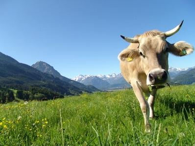 Urlaubsangebote Allgäu